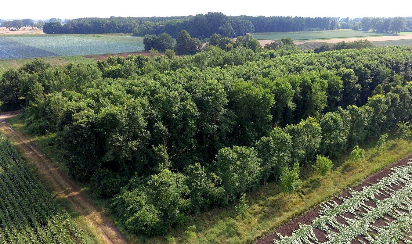Forest + Landscape | Resista Ulmen